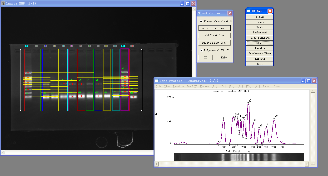 荧光凝胶成像分析系统